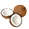 coconut in puja